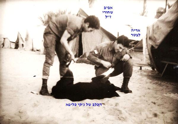 שחורי ז לאריה לצטר והכלב של ג קי כליפא