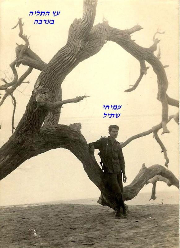 שתיל ליד עץ התליה בערבה